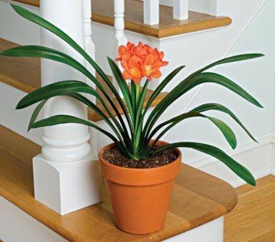 entretien plantes intérieures