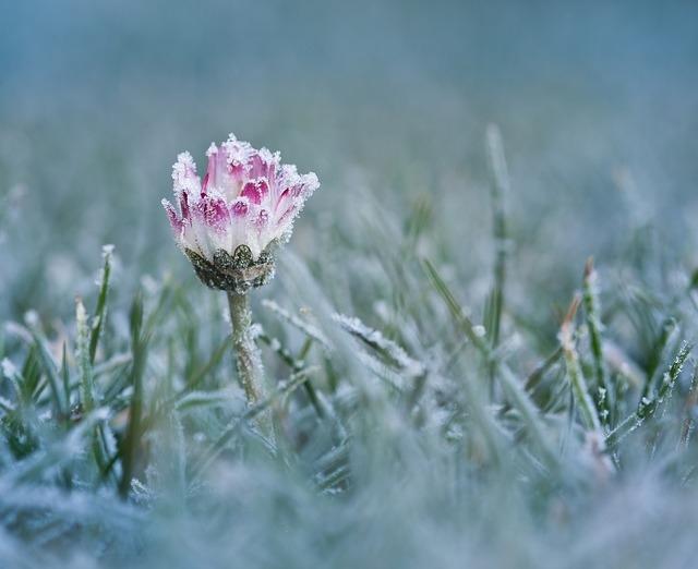 Protéger plante contre le gel