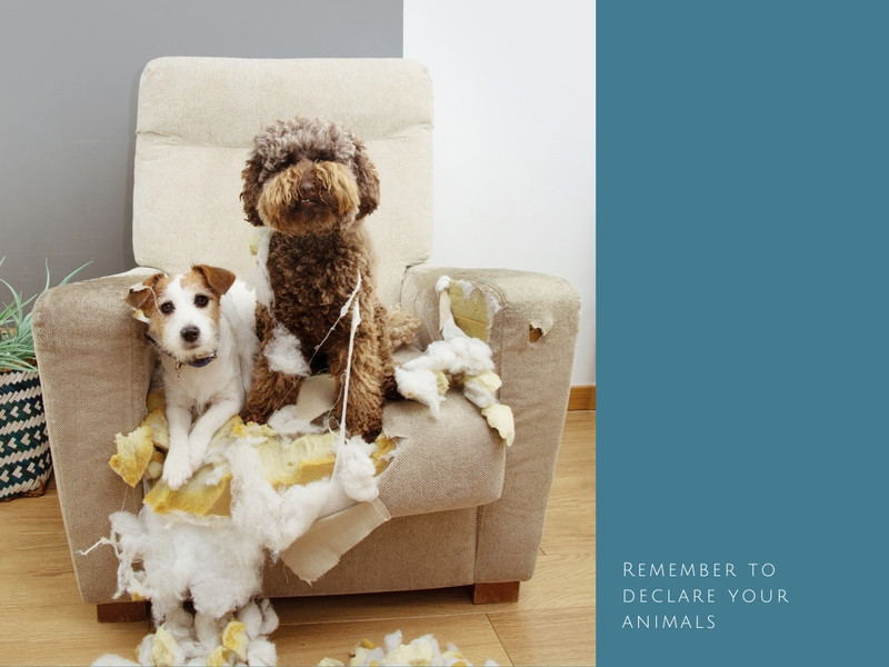 declare your pets home insurance