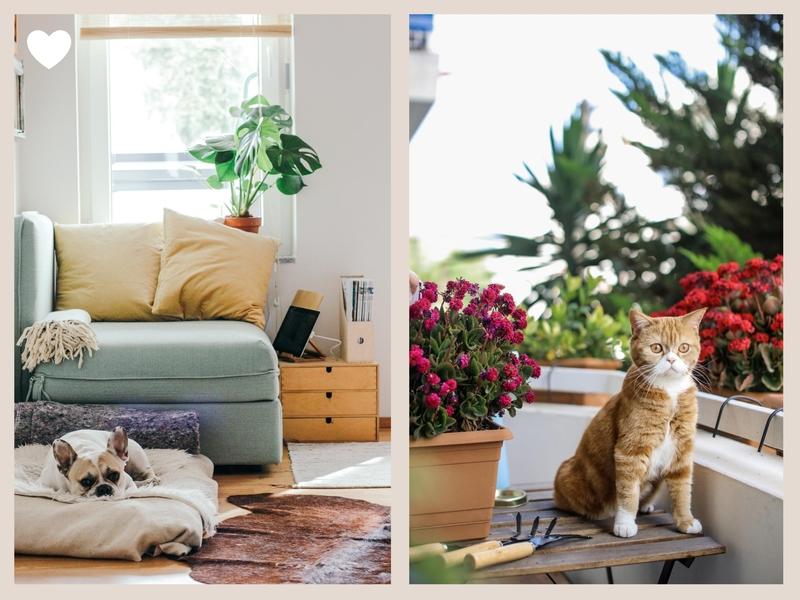 alt : laisser ses animaux sur les photos de sa propriété à vendre